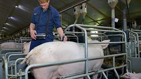 Kijkje in de keuken bij glastuinder prikkelt pigbusiness.nl