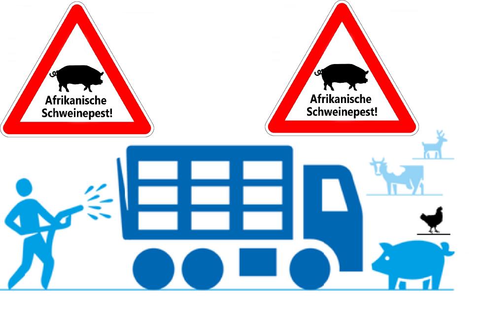 Schouten: 'Dreigingsniveau van komst varkenspest naar Nederland niet toegenomen'