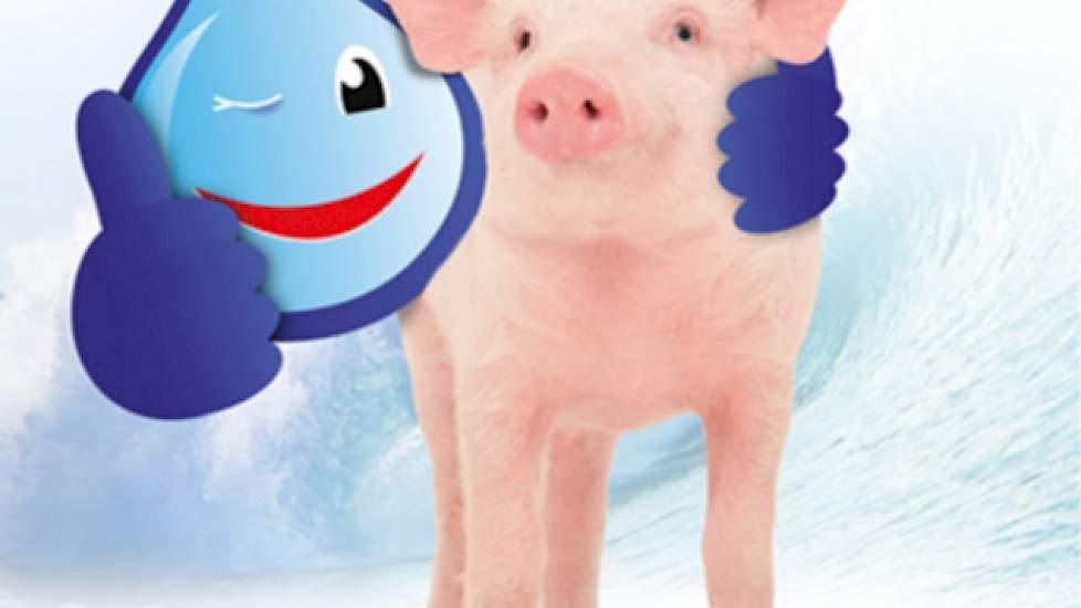 plan van aanpak salmonella Aanpak van salmonella bij varkens | Pigbusiness.nl   Nieuws voor  plan van aanpak salmonella